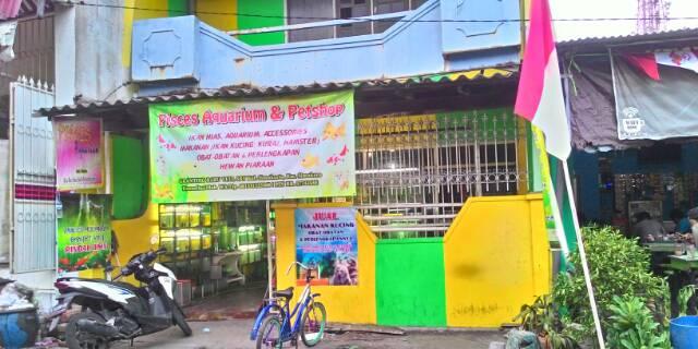 Toko Online Pisces Aquarium Petshop Shopee Indonesia