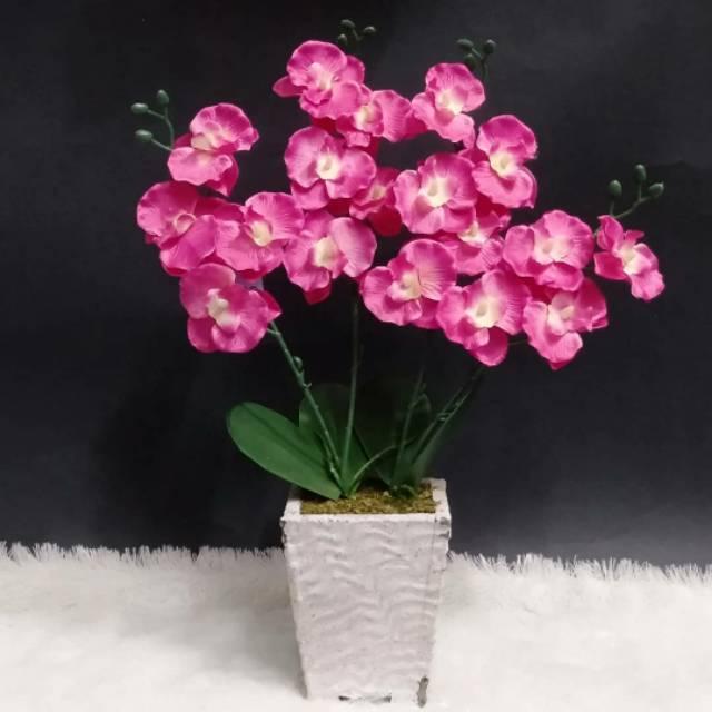 Bunga Anggrek Cantik Shopee Indonesia