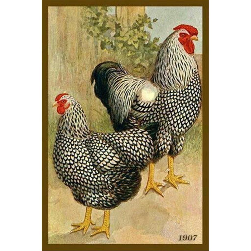 Lukisan Kanvas Ayam Betina 22 Collection