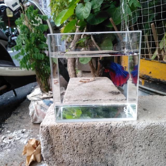 Aquarium Ikan Cupang Akrilik Acrylic Shopee Indonesia