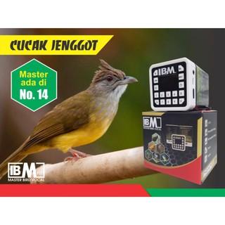 Masteran Burung Kicau Suara Burung Isian Jernih Murah Meriah Readystockkk Shopee Indonesia
