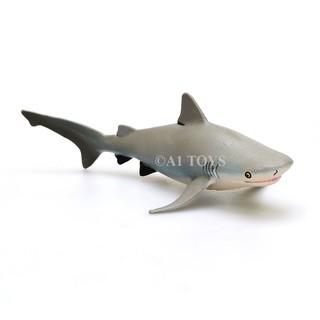 530 Koleksi Gambar Ikan Hiu Banteng Gratis Terbaru