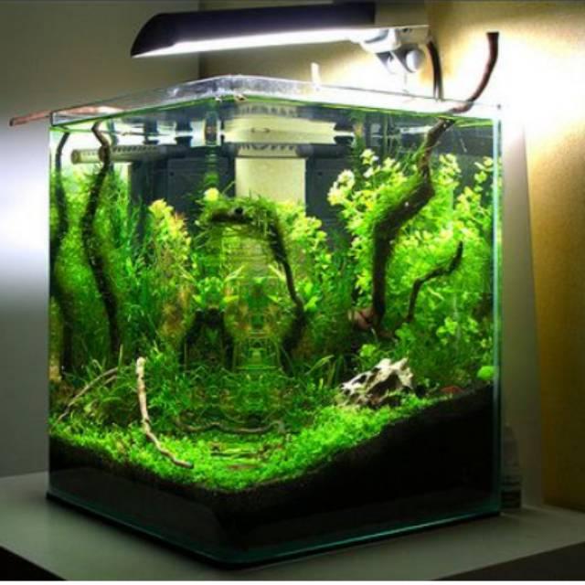 Aquarium Mini Soliter Buat Ikan Cupang Ikan Hias Kecil Uk 30x30x30 Shopee Indonesia