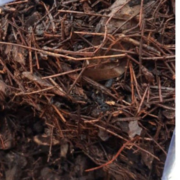 Media tanam humus daun pinus cacah 1 kg