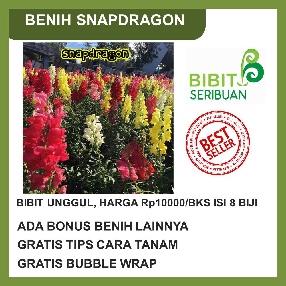 Bibit / Benih / Seeds Bunga Peony Mix Paeonia Lactiflora Flower | Shopee Indonesia