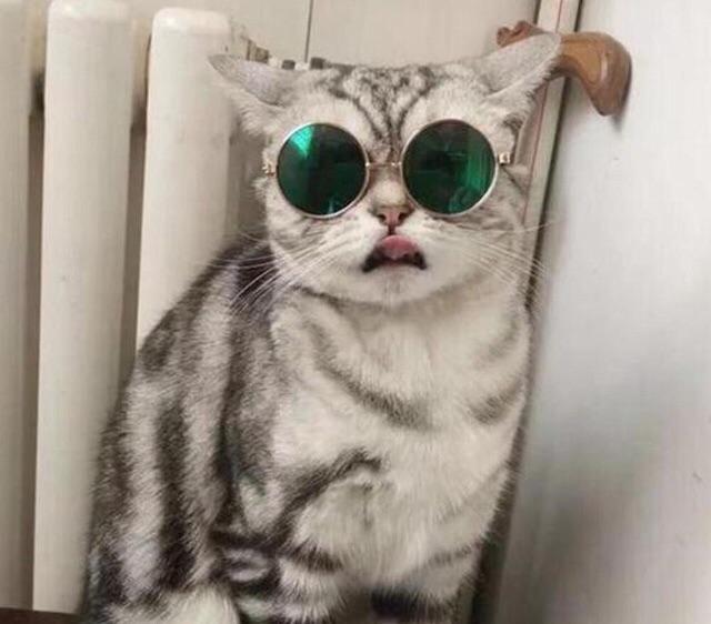 Download 64+  Gambar Kucing Lucu Pakai Kacamata Paling Bagus Gratis