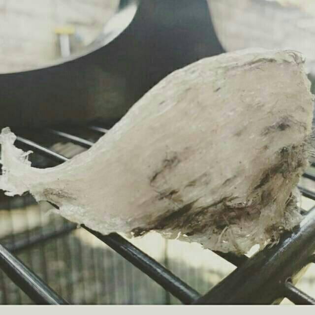Sarang Burung Walet Kotor Mangkok Oval Dan Sudut 100 Gr Shopee Indonesia