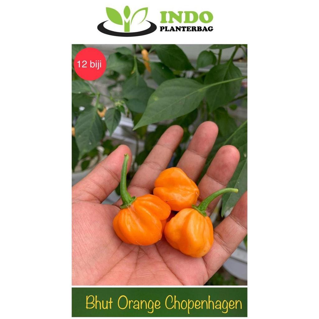 Bhut Orange Copenhagen