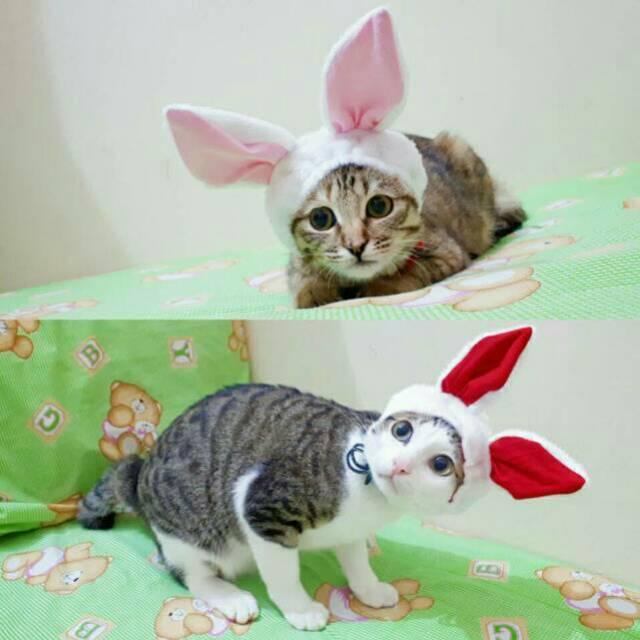 Unduh 94+  Gambar Kucing Lucu Pakai Baju Paling Keren Gratis