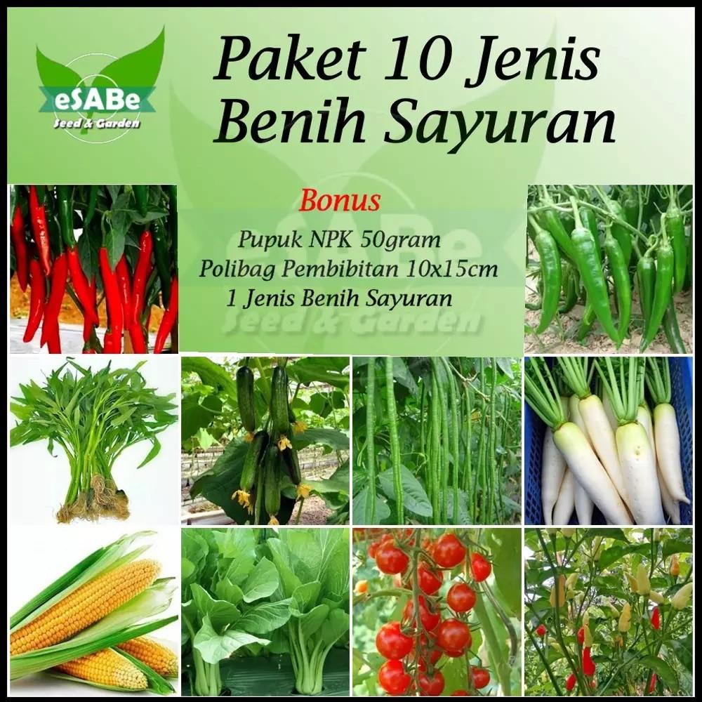 Paket Benih Biji 15 Jenis Sayuran Hidroponik Konvensional Shopee Tanaman Buah Indonesia