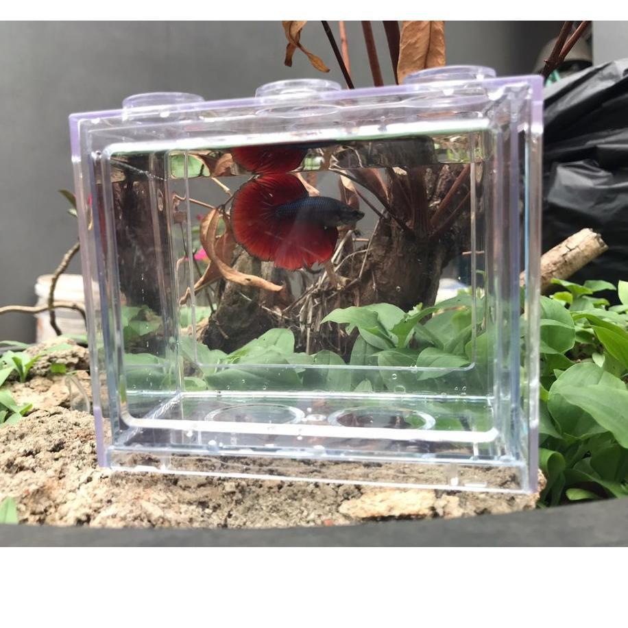 W 57 Akuarium Ikan Cupang Akrilik Aquarium Mini Acrylic Ikan Cupang Mi 08 T1w9 Shopee Indonesia