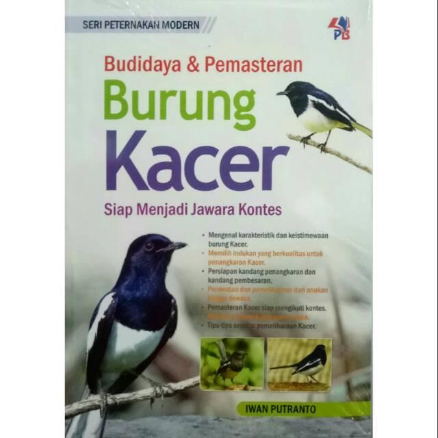 Budidaya Pemasteran Burung Kacer Siap Menjadi Jawara Kontes Shopee Indonesia