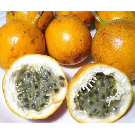 Amefurashi Bibit / Benih / Seeds Buah Markisa Kuning Yellow Passion Fruit | Shopee Indonesia