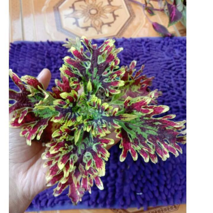 Flash Sale!! KODE-770 miana premium iler batik jawer kotok