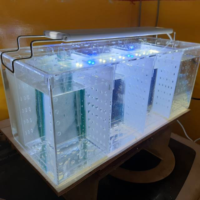 Aquarium Soliter Cupang Dengan Filterisasi Shopee Indonesia