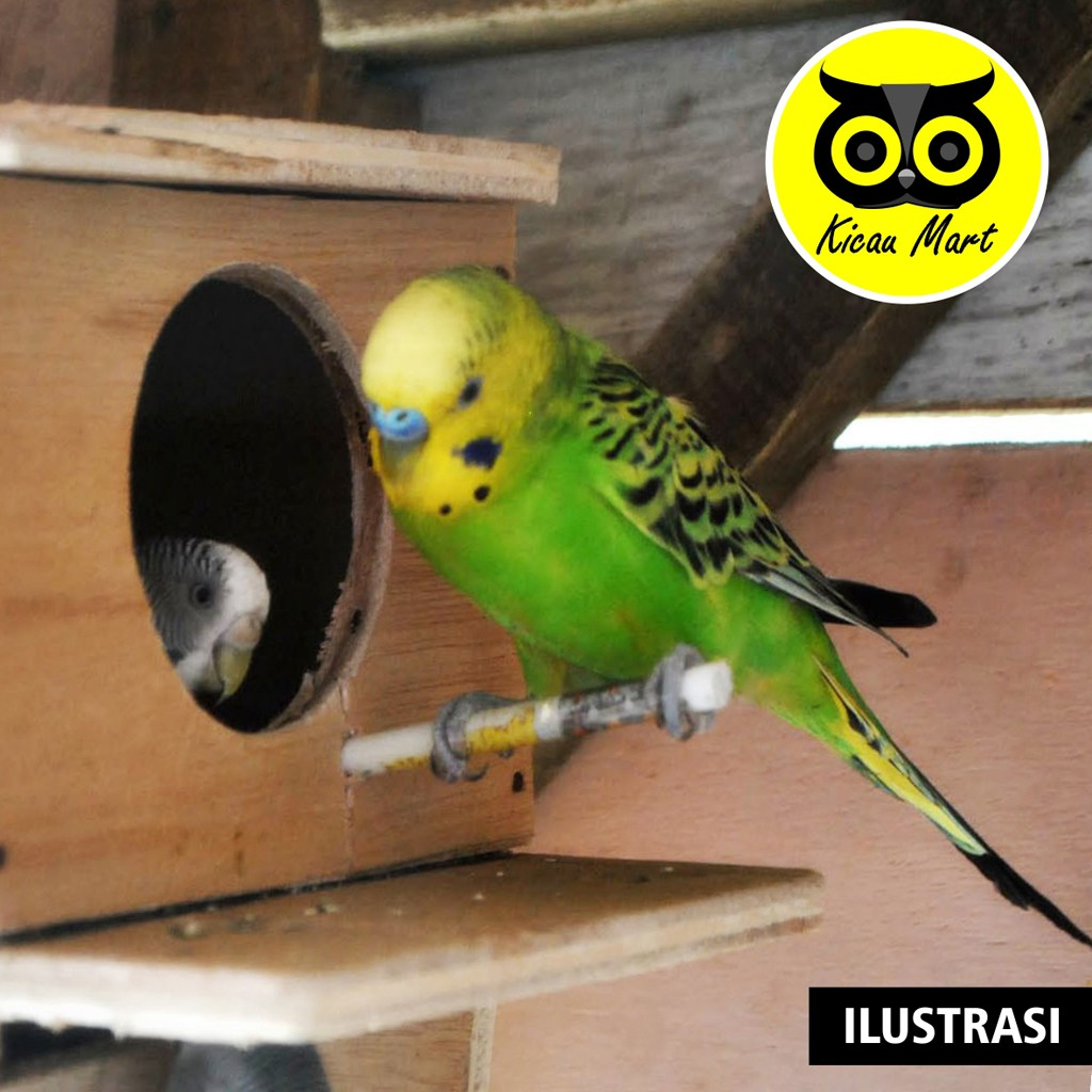 Glodok Parkit Kayu Gelodok Glodog Sarang Wadah Tempat Ternak Burung Lovebird Love Bird Kenari Glprkt Shopee Indonesia