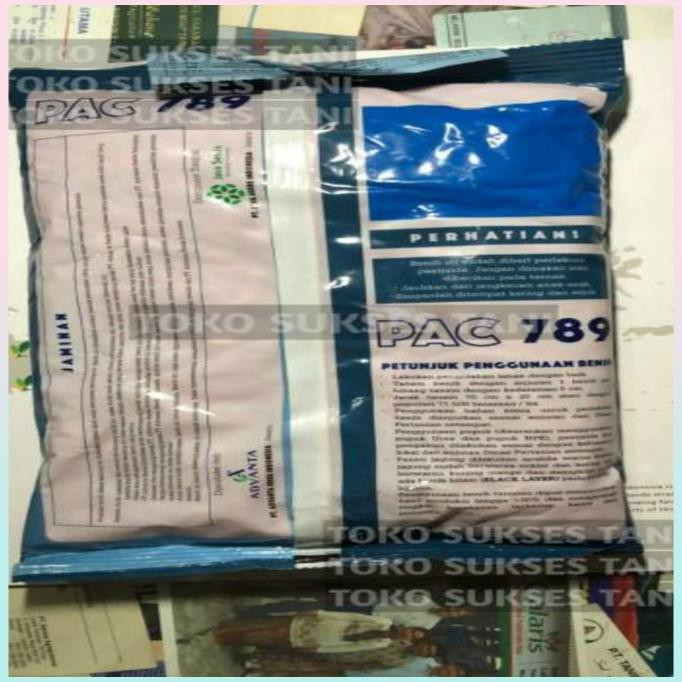 Unik Benih Jagung Pac 789 Raksasa Hibrida Super Dari Pacific Seed