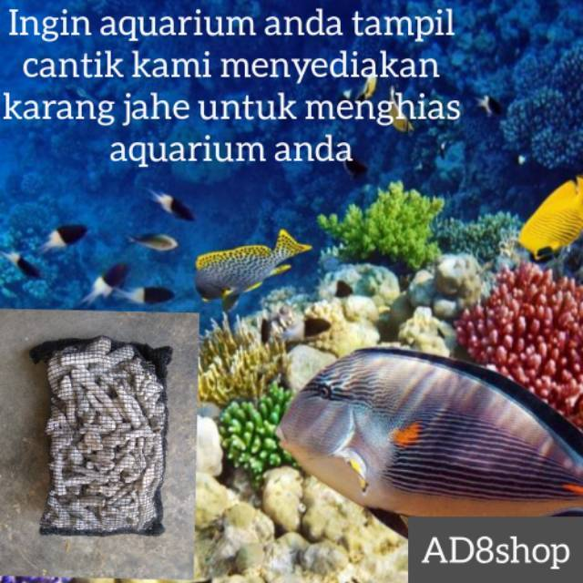 Karang Jahe Media Filter Aquarium Ikan Koi Japmat Aquascape Bioball Bioring Zeloit Shopee Indonesia