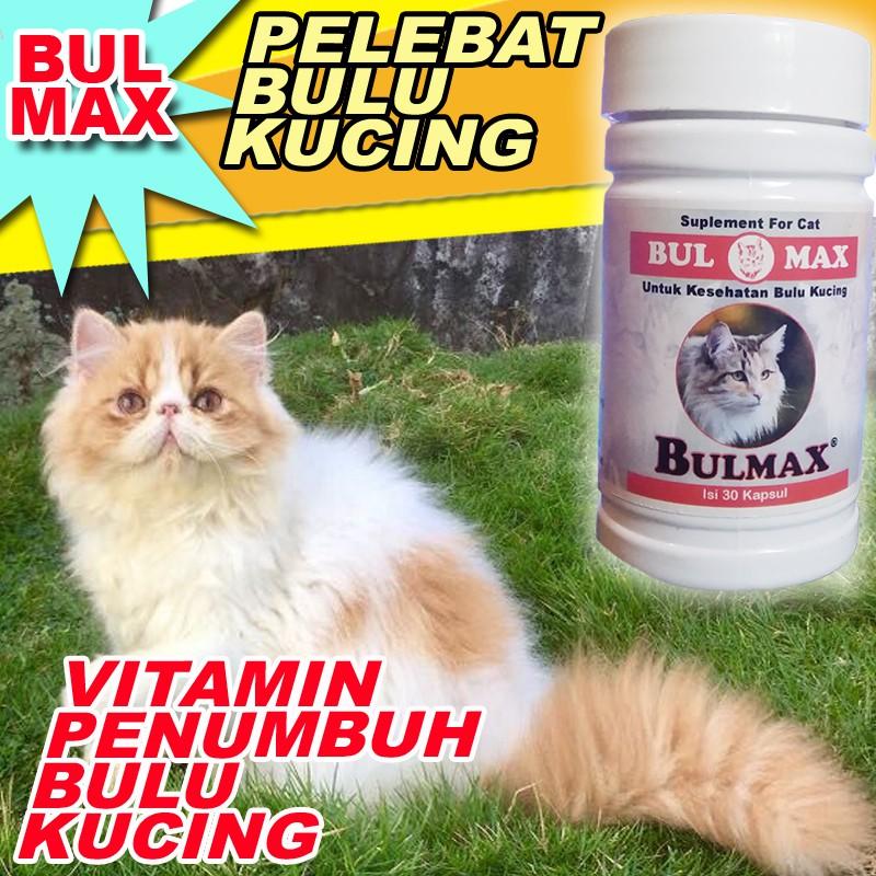 Bm10 Obat Penumbuh Bulu Kucing Pelebat Bulu Kucing Bulmax Obat Bulu Kucing Rontok Vitamin Bulu Cat Shopee Indonesia