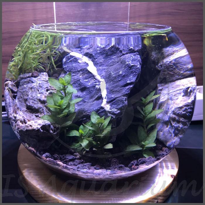 Ikan Lampu Walstad Led Lampu Aquascape Lampu Led Aquarium Bulat Bowl Perawatan Shopee Indonesia
