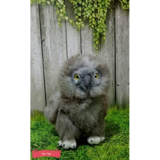 Boneka Burung Hantu Celepuk Reban Sunda Scops Owl Shopee Indonesia