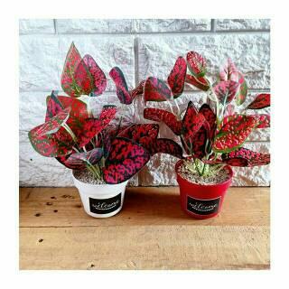 8cd74a6d4 DAUN GRUP KECIL - daun bunga palsu plastik artificial shabby chic | Shopee  Indonesia