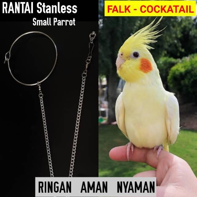 Rantai Falk Cockatail Parkit Australia Shopee Indonesia