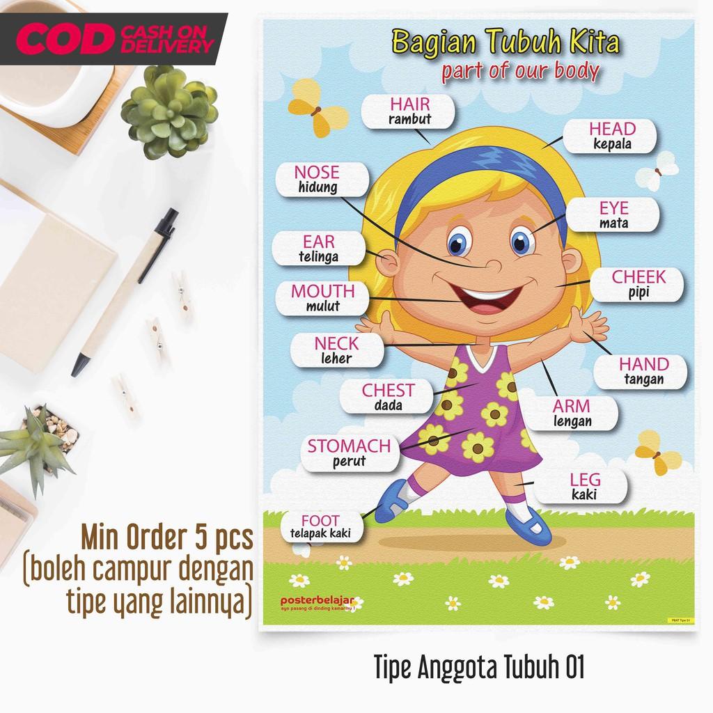 Posbel Poster Belajar Anggota Tubuh Manusia Tipe 01 Poster Pendidikan Mainan Edukasi Edukatif Anak Shopee Indonesia