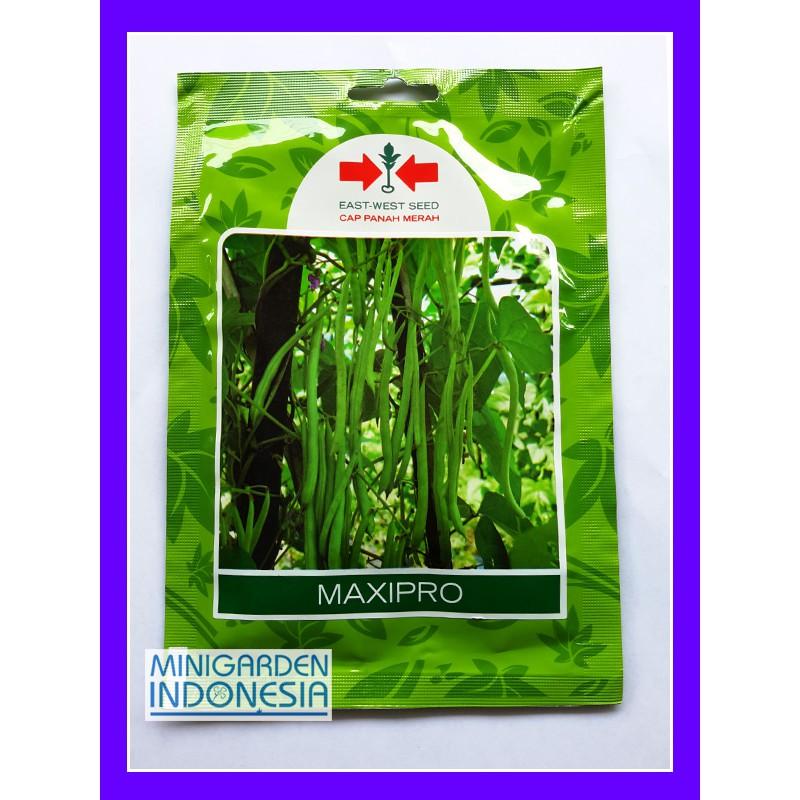 1 Pack 125 Benih cabai Merah Besar Hot Chili F1 Panah Merah bibit tanaman sayur sayuran cabe | Shopee Indonesia