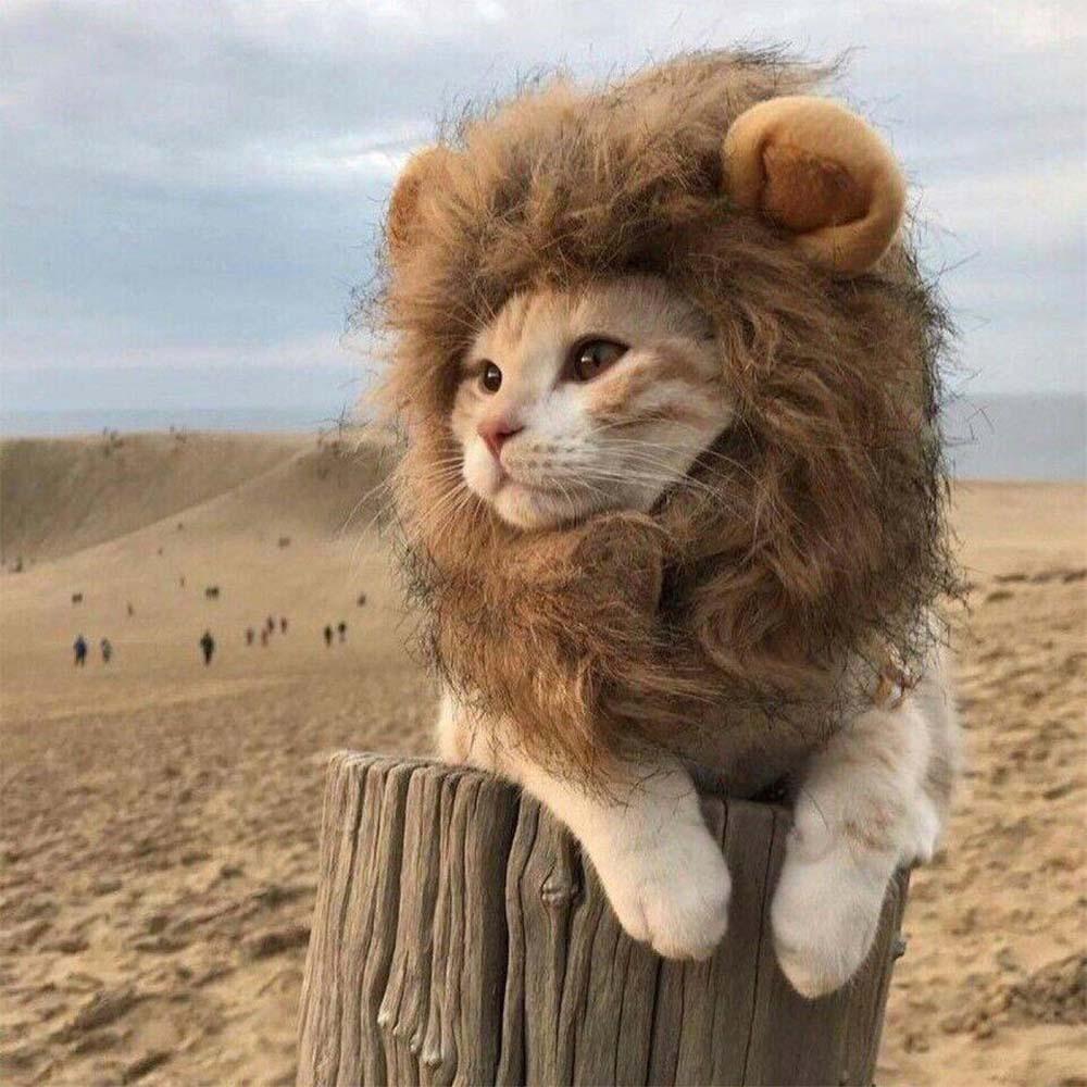 Wig Rambut Palsu Model Singa Untuk Anjing Kucing