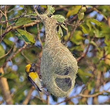 Sarang Burung Manyar Untuk Hiasan Rumah Taman Dan Restoran Shopee Indonesia
