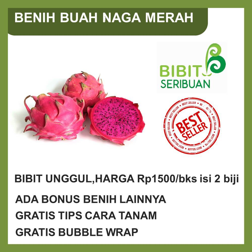BENIH / BIBIT / BIJI / SEED BUAH NAGA DRAGON FRUIT MERAH BERKUALITAS UNGGUL DI BOGOR   Shopee Indonesia