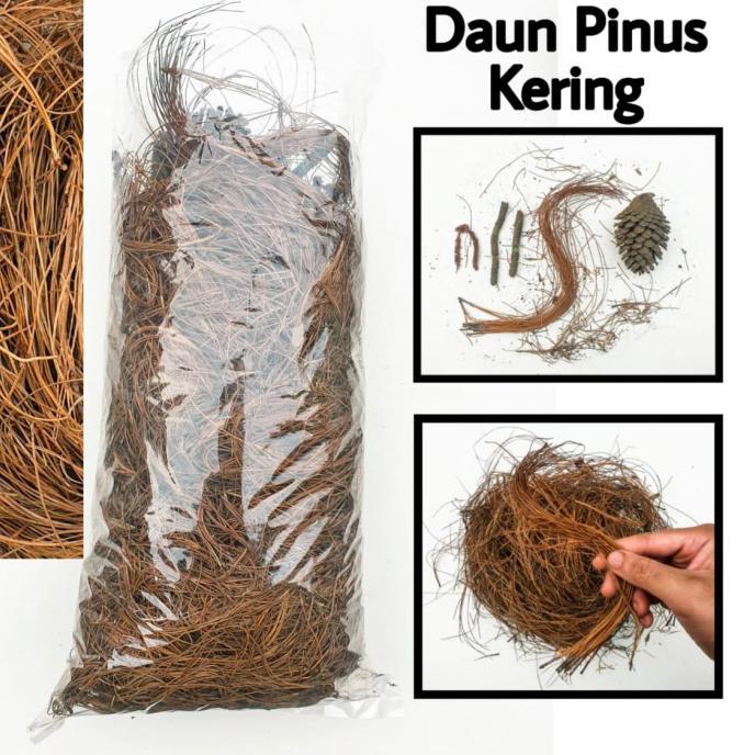 Paling Dicari] Daun Pinus Kering Sarang Burung / Humus Media Tanam / Bahan Kerajinan