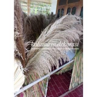 pampas bulu rumput bunga kering dekorasi rustic buket