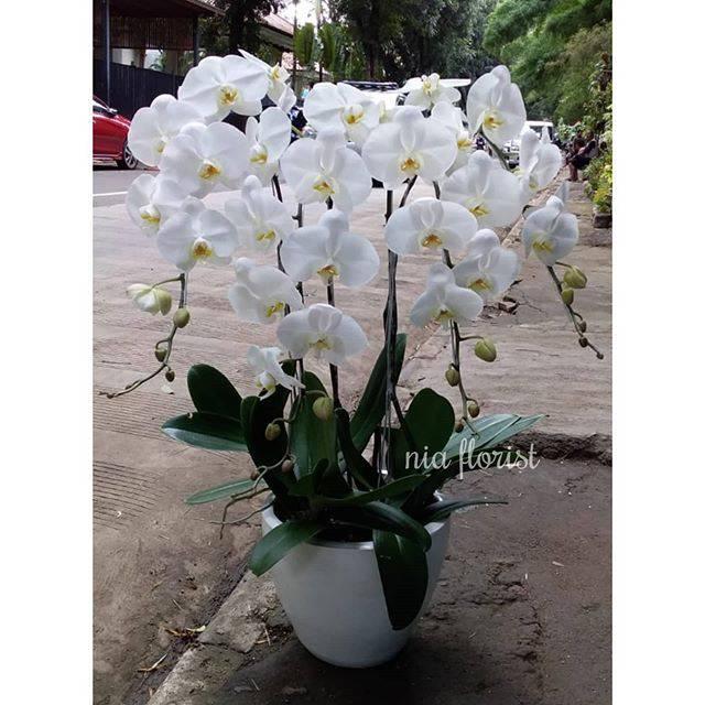 Rangkaian Bunga Anggrek Bulan Putih Shopee Indonesia