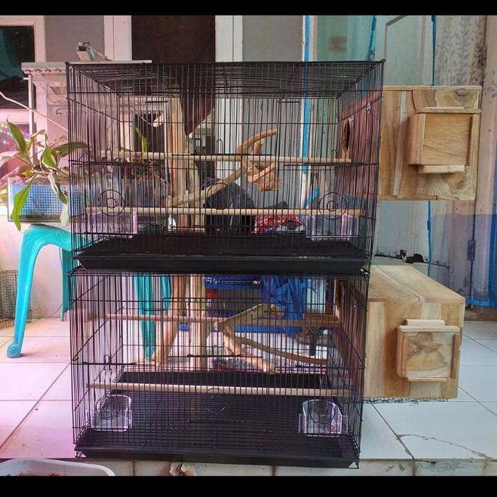 Kandang Ternak Lovebird Falk Fullset Shopee Indonesia