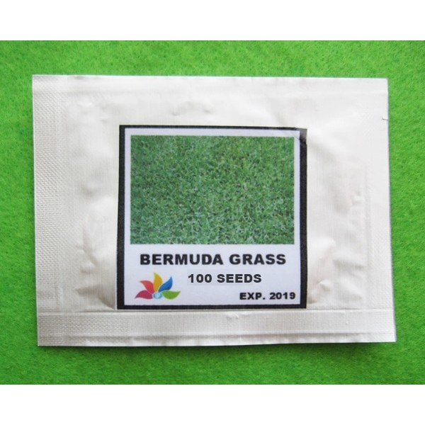 Benih Biji Rumput Bermuda Grass Kemasan Mini Pack - GP | Shopee Indonesia