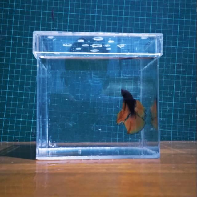 Aquarium Ikan Cupang Dan Ikan Kecil Lainnya Shopee Indonesia
