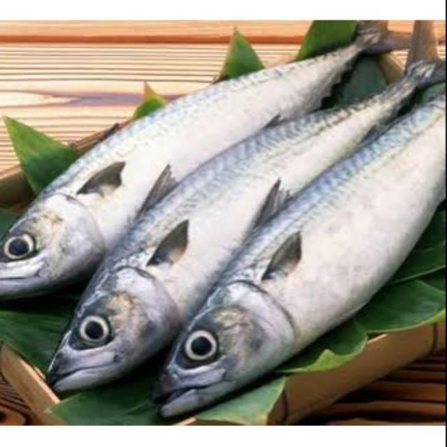 Paling Murah Ikan Tongkol Kecil Fresh 1 Kg Shopee Indonesia