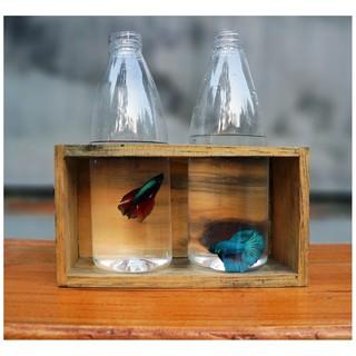 990+ Gambar Ikan Cupang Dalam Botol Gratis Terbaik