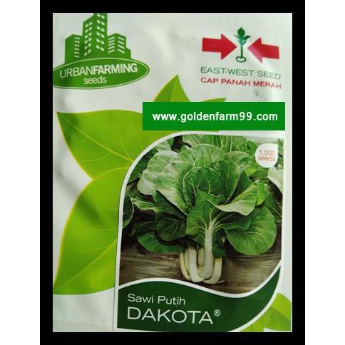 Promo di shopee Benih / BIbit / Seed Anthurium Jenmanii QR0954   Shopee Indonesia