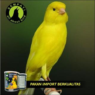 PATTE VERSELE LAGA PAKAN BURUNG LOVEBIRD FINCH KENARI. suka: 6 .