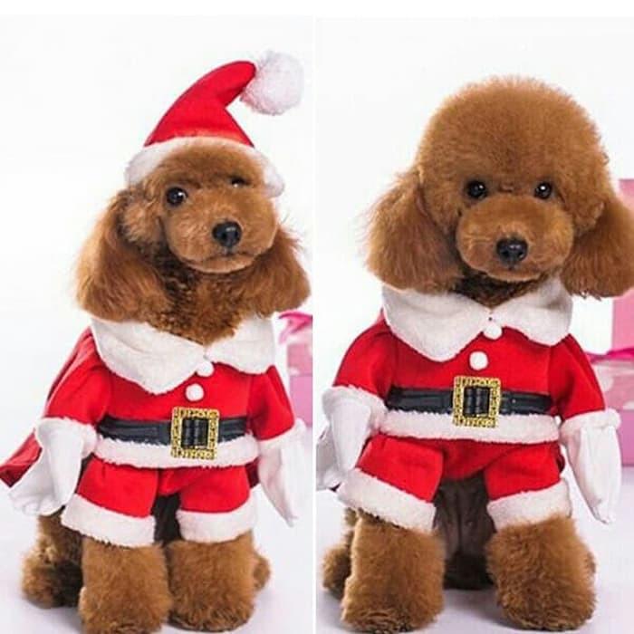Baju Anjing Besar / Baju Adidog Anjing Besar / Kostum Anjing | Shopee Indonesia