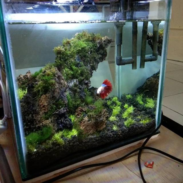 Aquarium Mini Soliter Ikan Cupang Ikan Hias Kecil 30x25x30 Shopee Indonesia