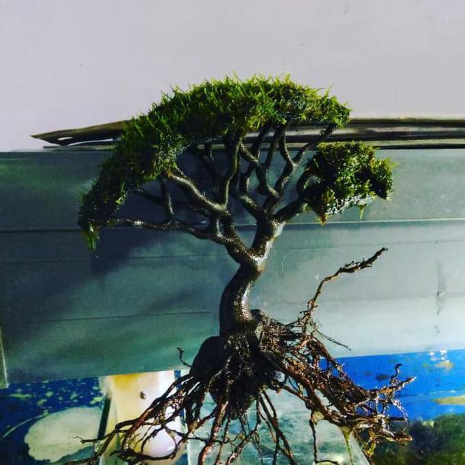 Jual Bonsai Aquascape - Aquascape Ideas