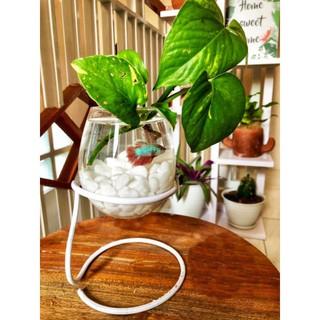 paket vas aquarium mini hiasan meja kamar dekorasi rumah