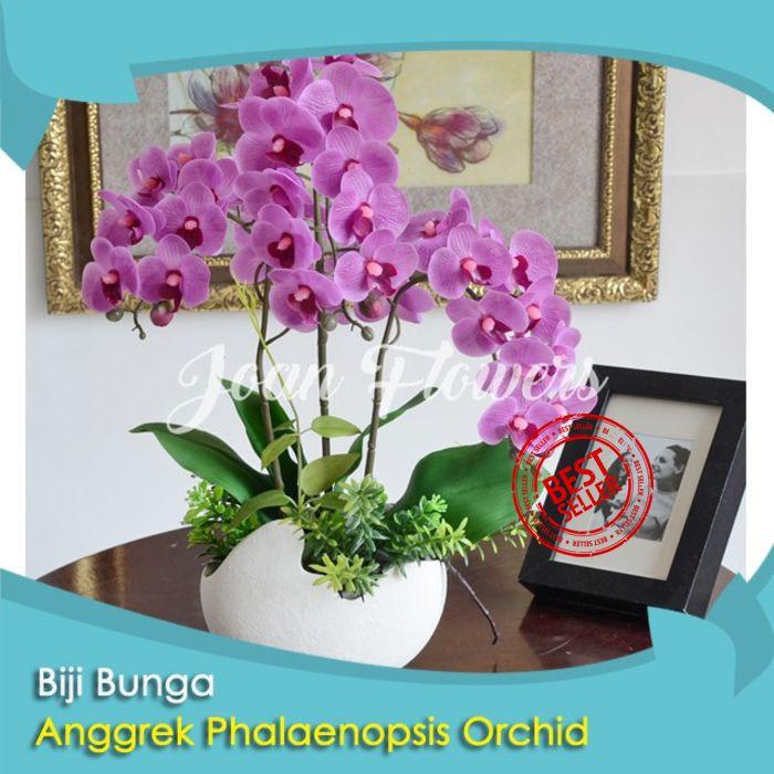 Bibit Tanaman Bunga Anggrek Phalaenopsis Orchid Bonsai Benih Bibit Tanaman Hias Untuk Dekorasi Rumah Shopee Indonesia