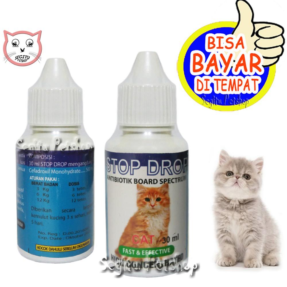 23++ Antibiotik untuk kucing flu ideas