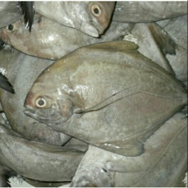 Ikan Bawal Laut Shopee Indonesia