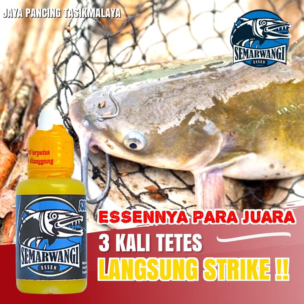 Essen Ikan Lele Kilo Gebrus Harian Semarwangi Paling Ampuh 2019 Shopee Indonesia
